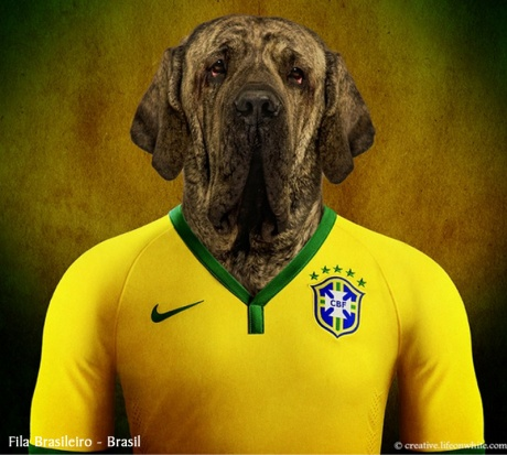 copa-do-mundo-cachorros-selecoes-futebol-brasil